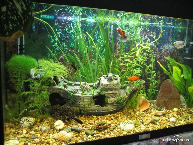 Обои аквариумные рыбки на рабочий стол 6